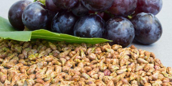 Extrait de pépins de raisin et dysfonction érectile